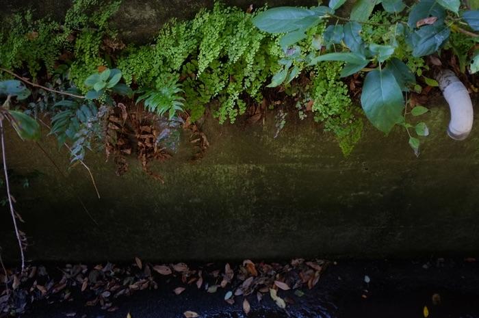 plantes le long d'un mur
