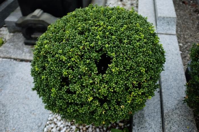 arbre rond avec un trou dans le feuillage