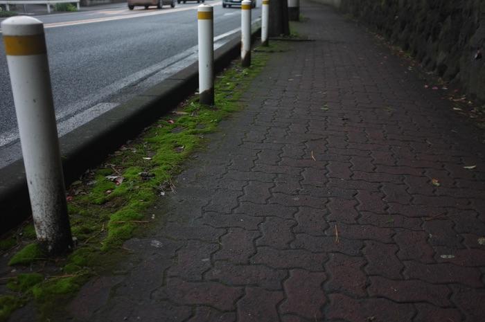 trottoir et mousse au bord de la route