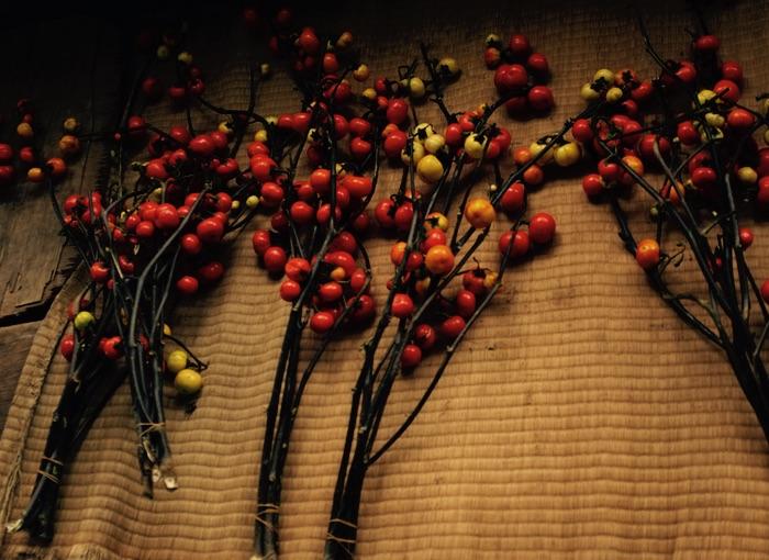 plantes sur un tatami