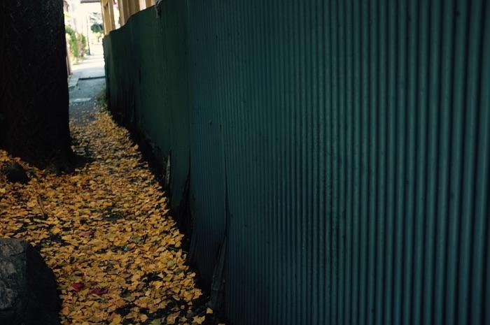 Feuilles mortes jaunes derrière un mur bleu
