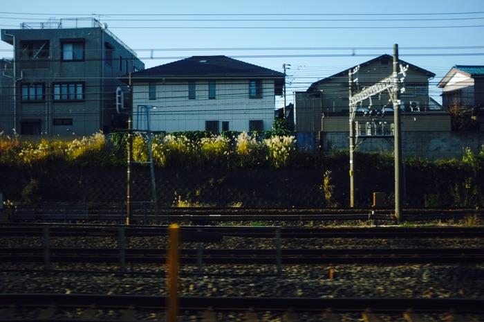 paysage depuis le train