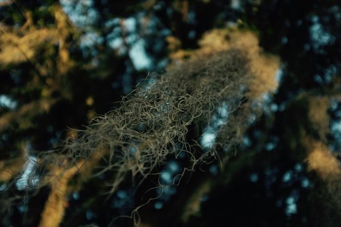 plante en liane