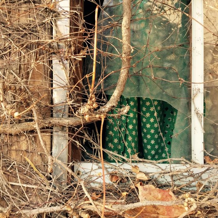 fenêtre brisée et lierre
