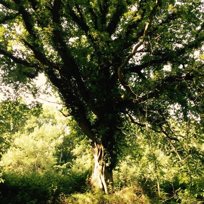 arbre dans le soleil