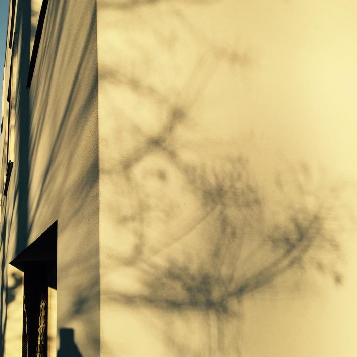 ombre d'un arbre sur un mur