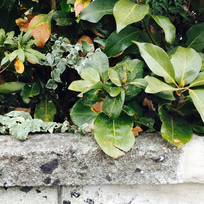 mur et plantes au-dessus