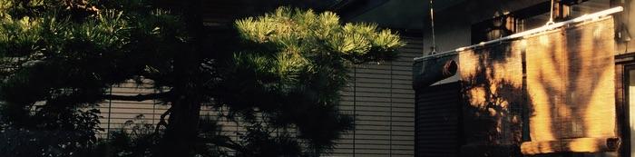 Soleil levant sur le pin et les sudare