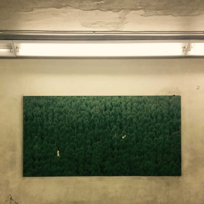 affiche de forêt dans un couloir