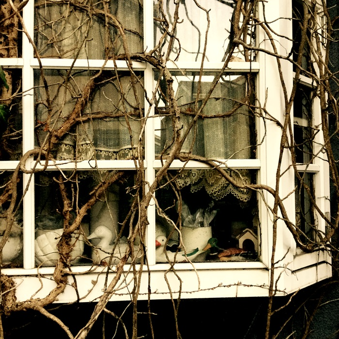 Lierres enserrant une fenêtre