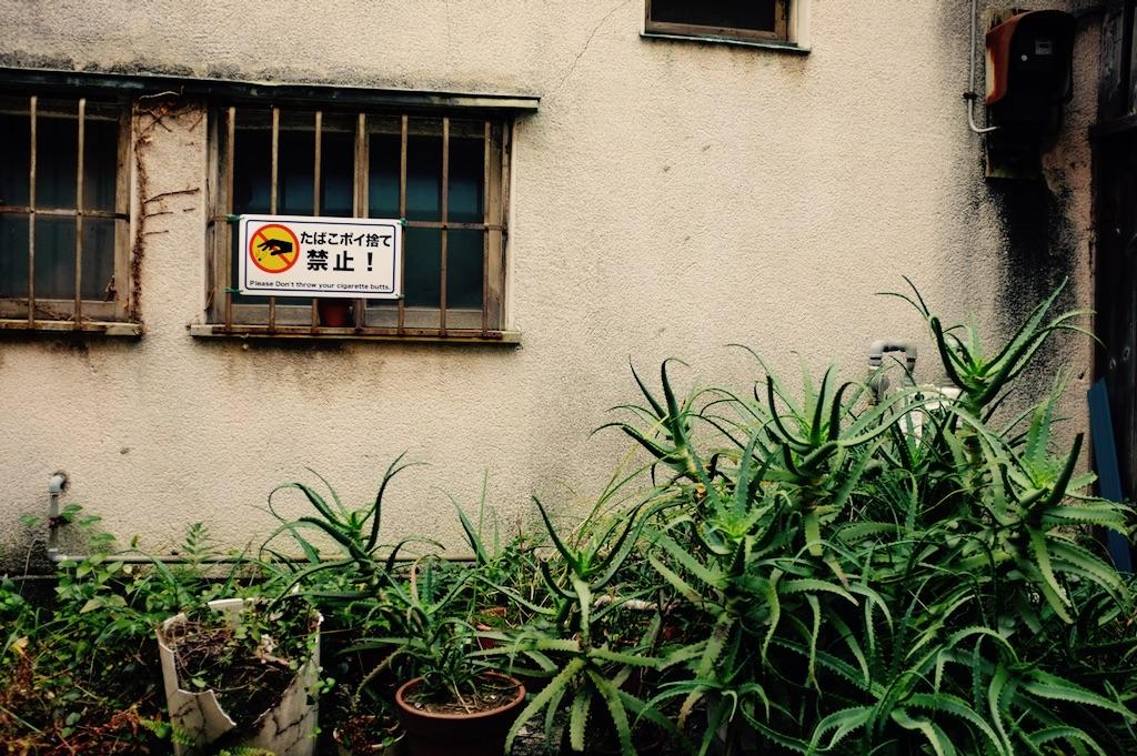 Plantes dans la rue