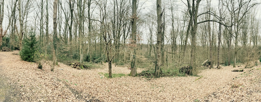 Forêt fin d'hiver