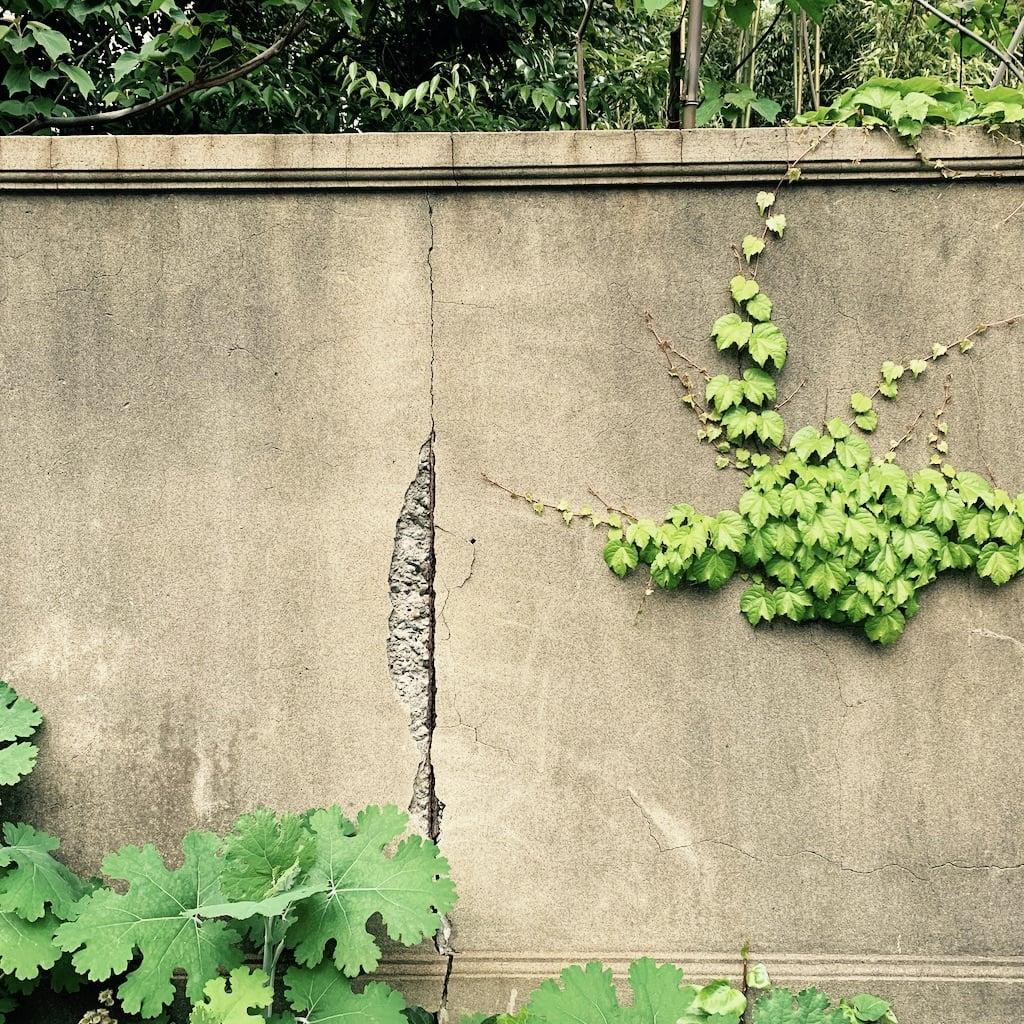 mur envahi par les plantes