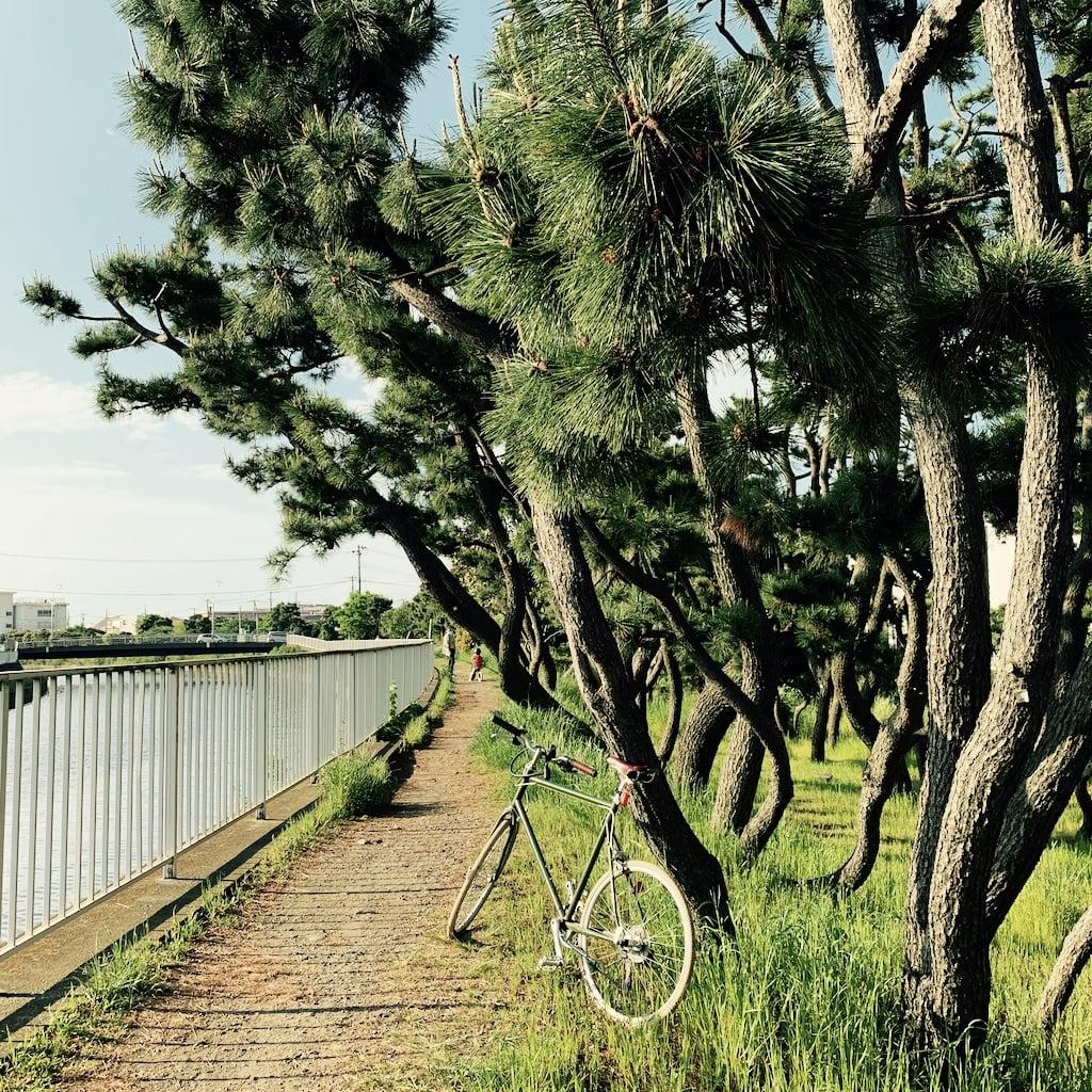 vélo contre les pins le long d'une rivière