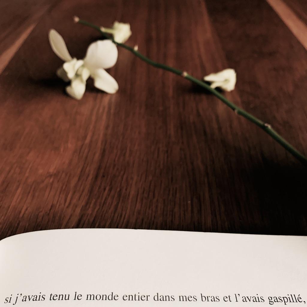 orchidée sur une table