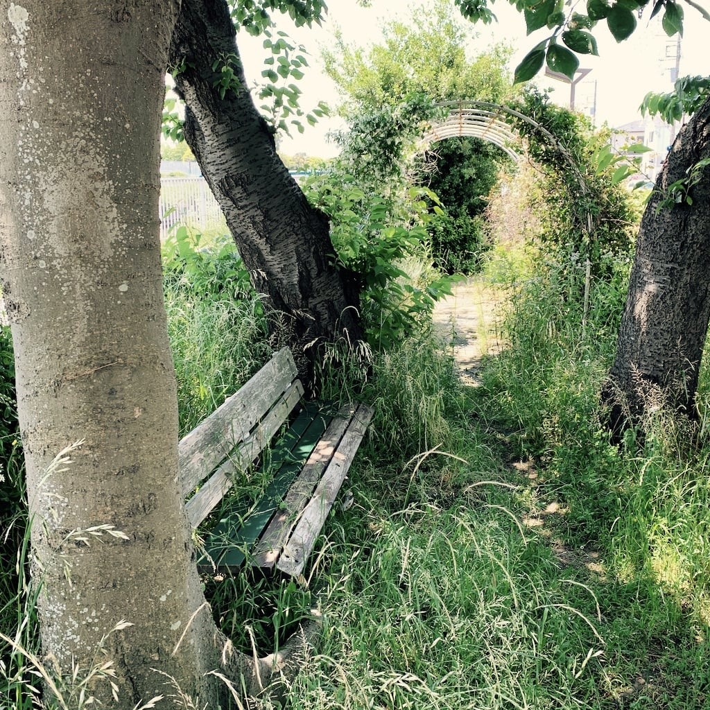 banc entre les arbres et herbes
