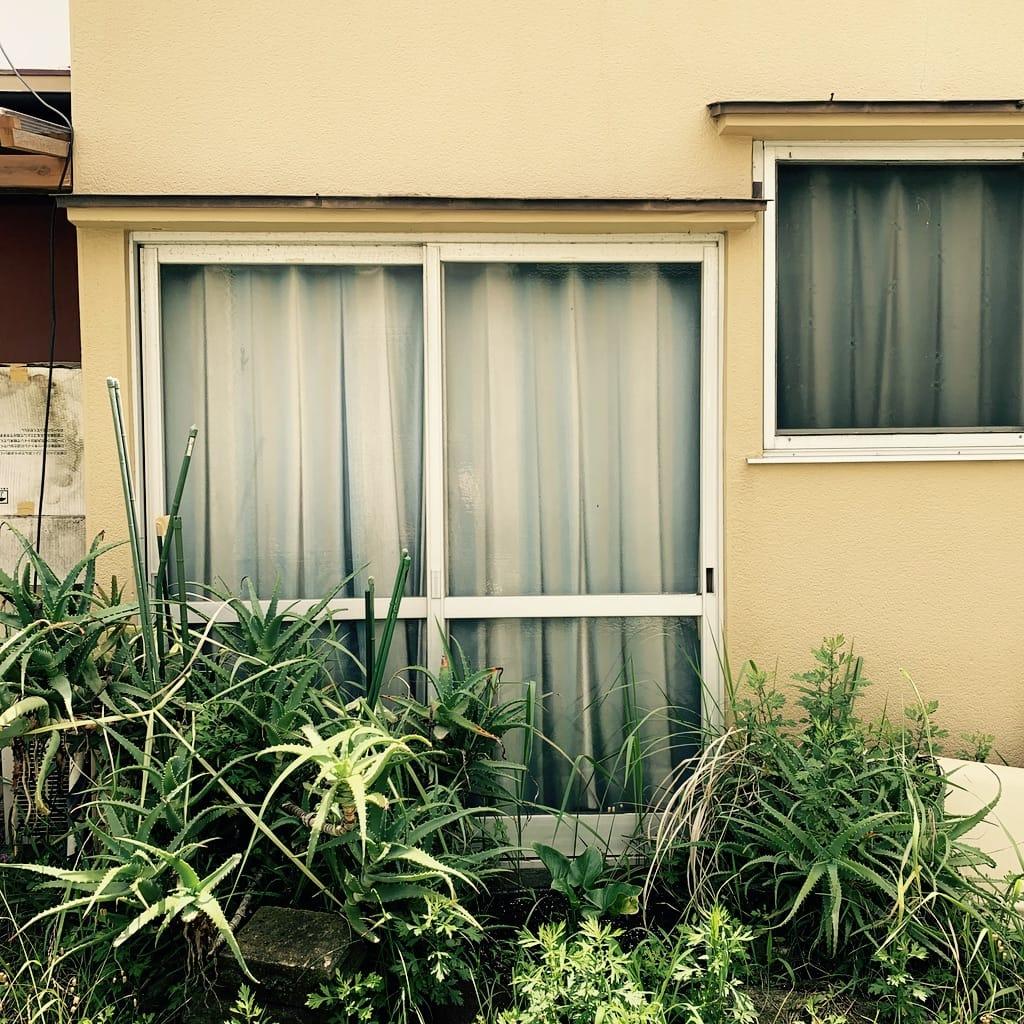Fenêtre et plantes grasses