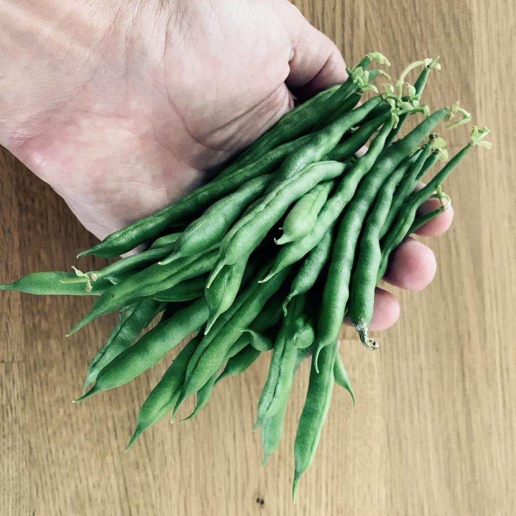 Haricots verts dans une main