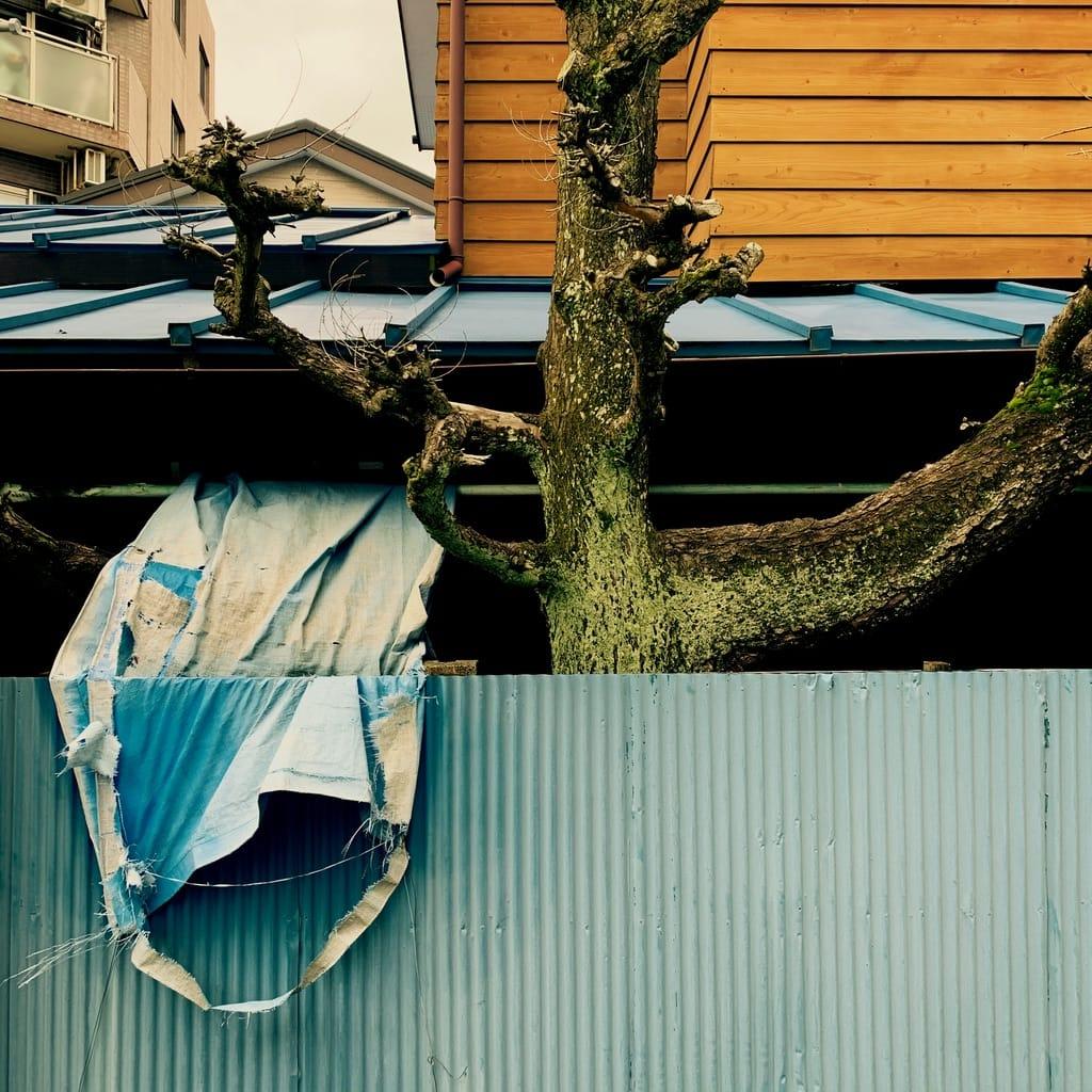 toile déchirée et arbre