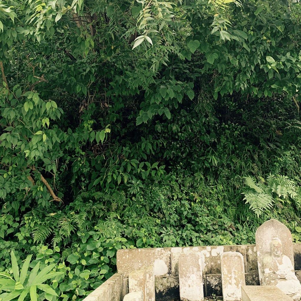 Tombes et forêt