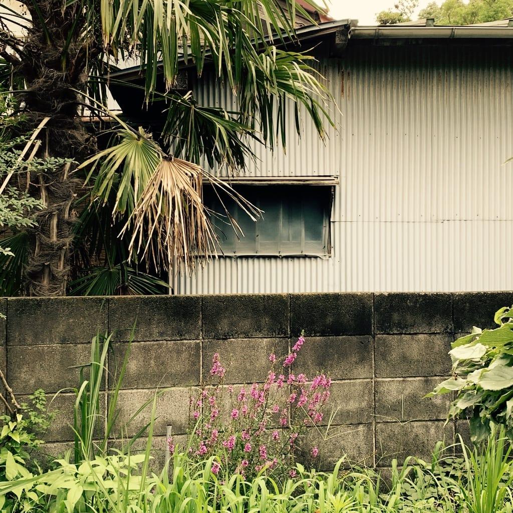 mur, végétation et fenêtre de maison