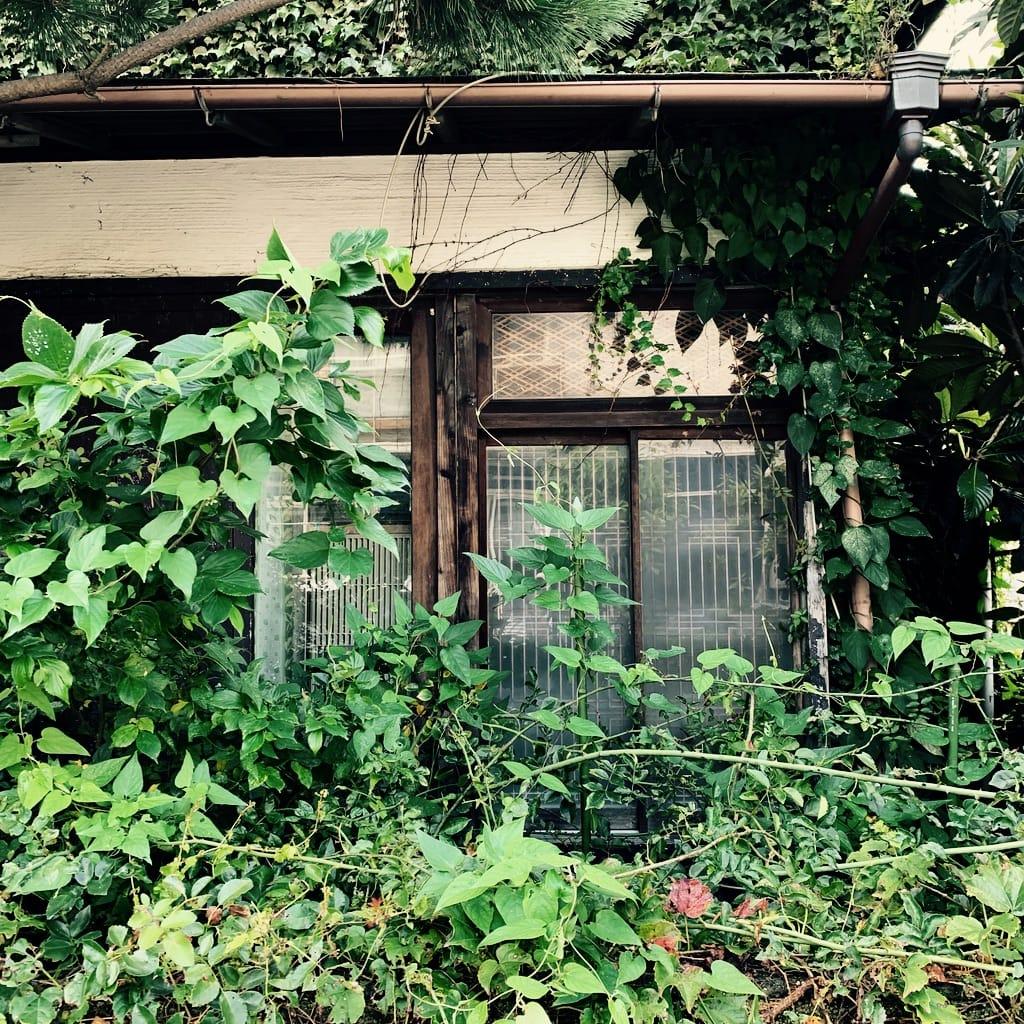 Fenêtre et végétation