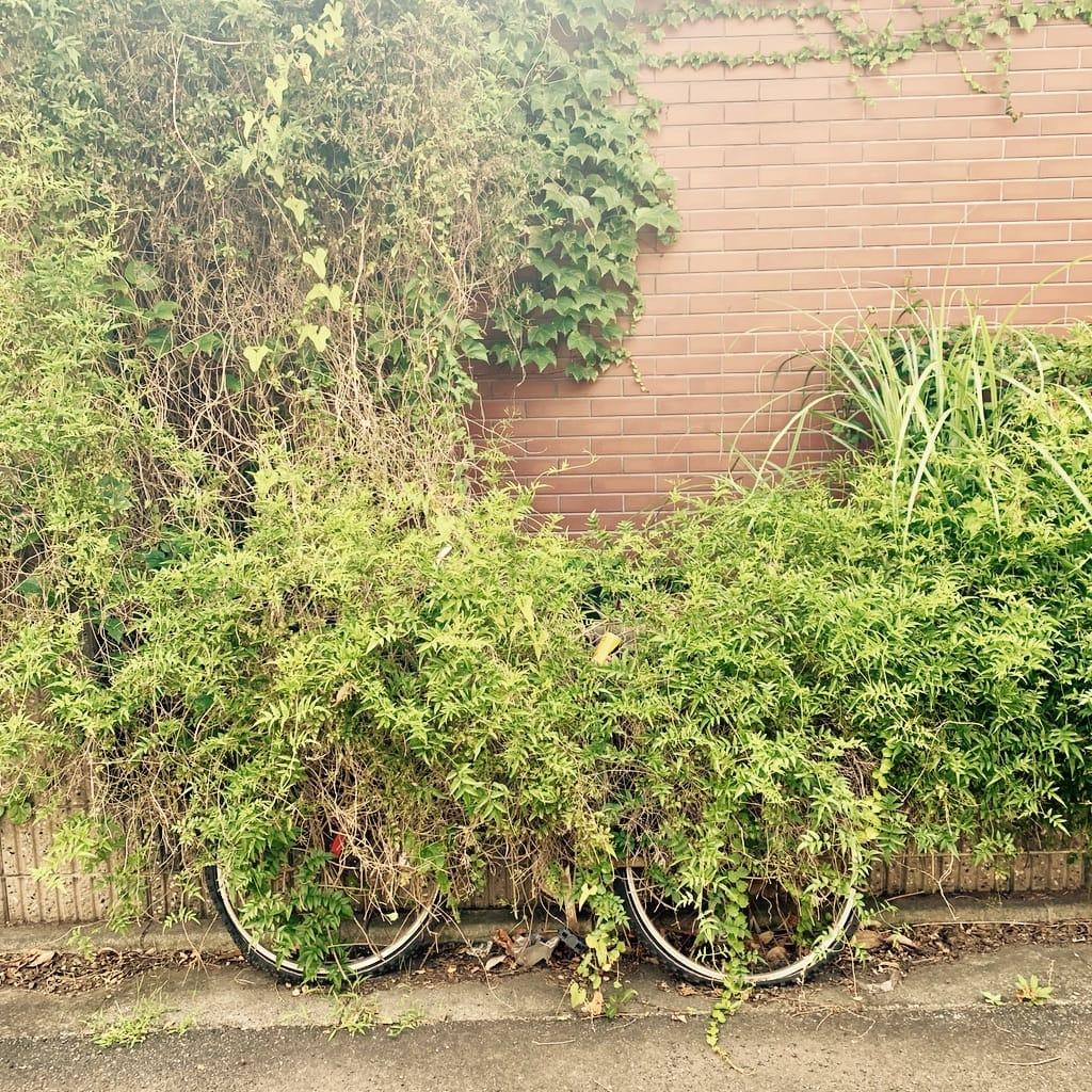 vélo envahi par les plantes