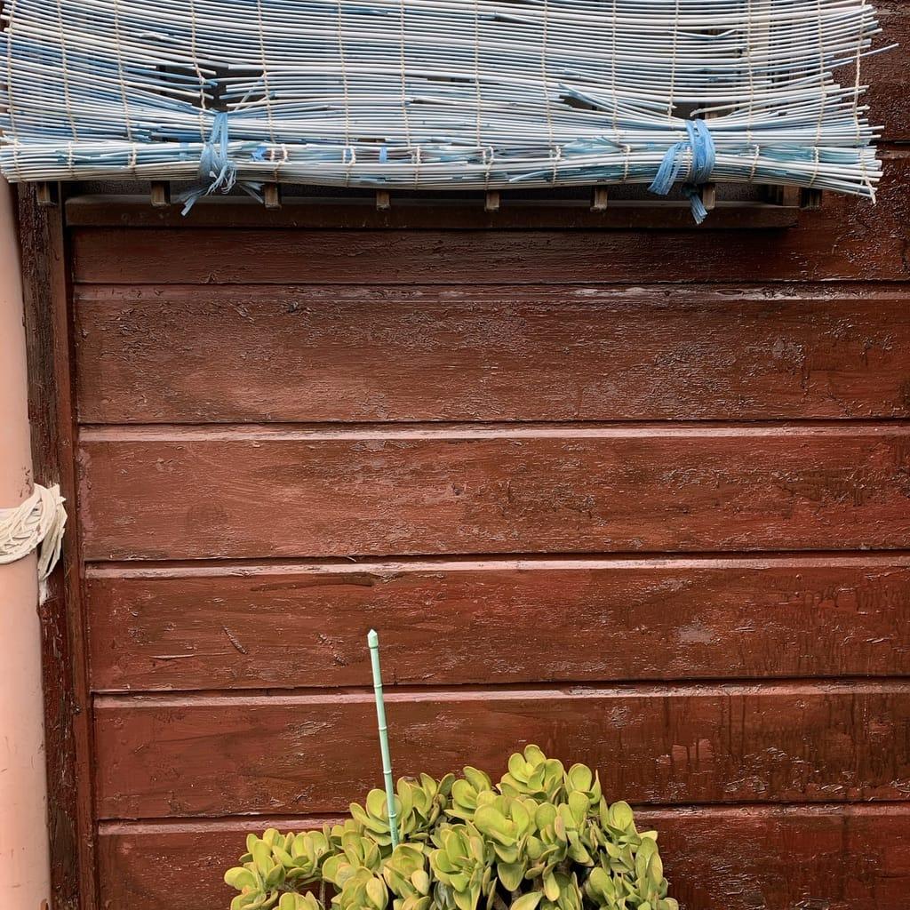 rideau et plante
