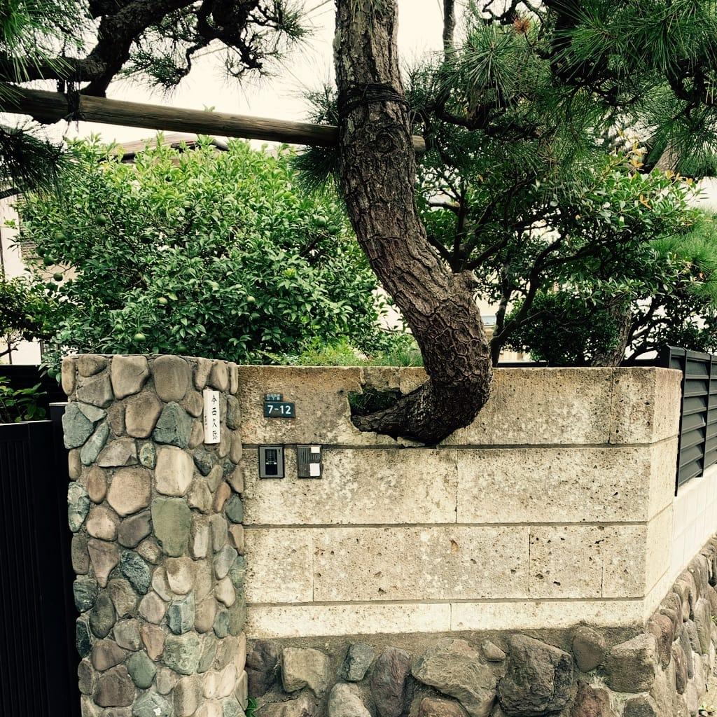 Cloture découpée autour de l'arbre