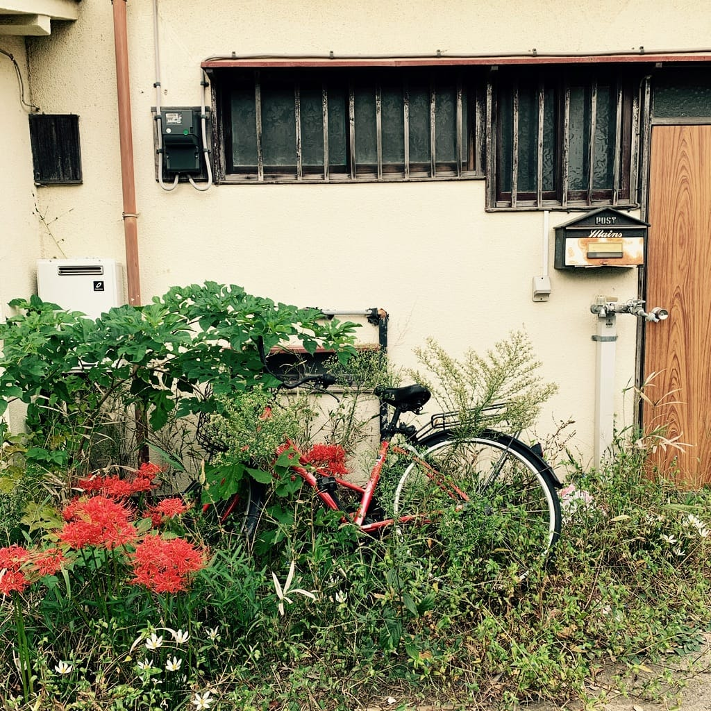 Vélo rouge et Spider Lily