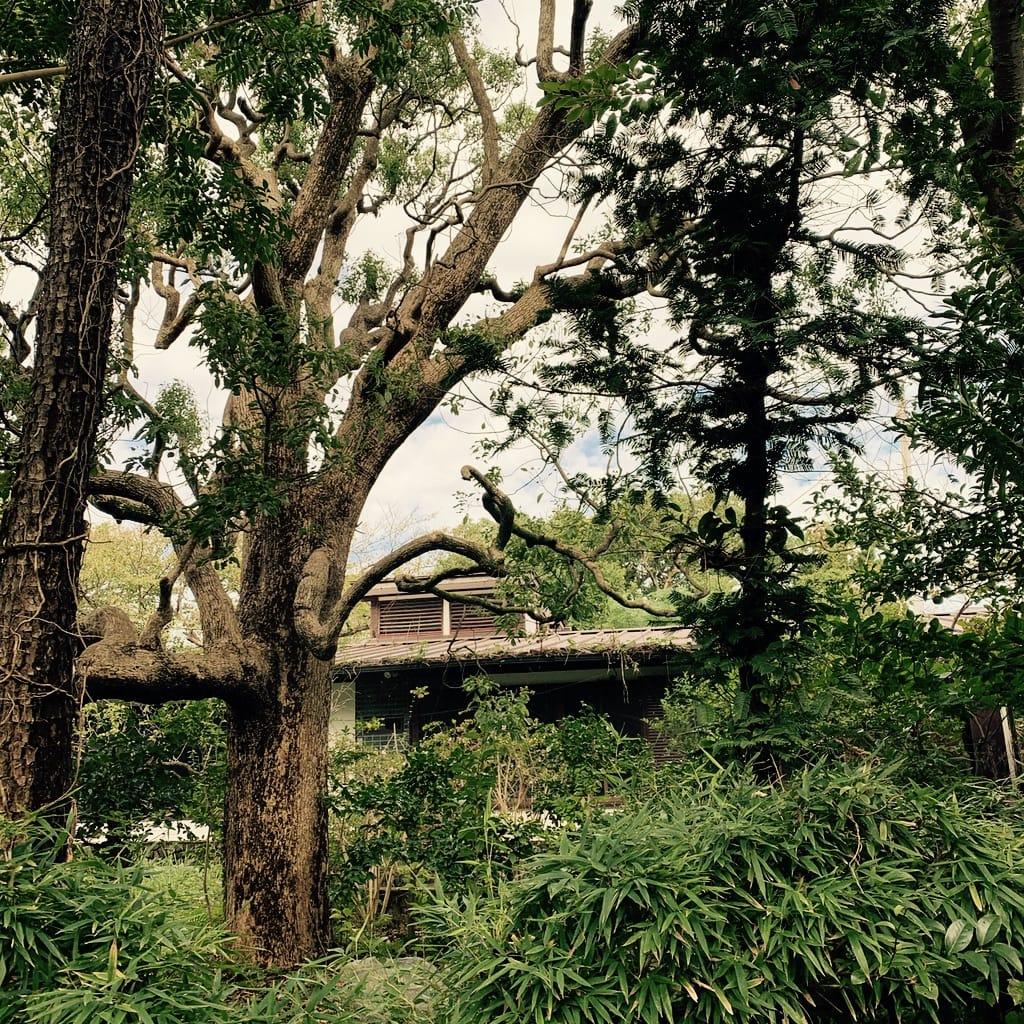 Maison et arbres