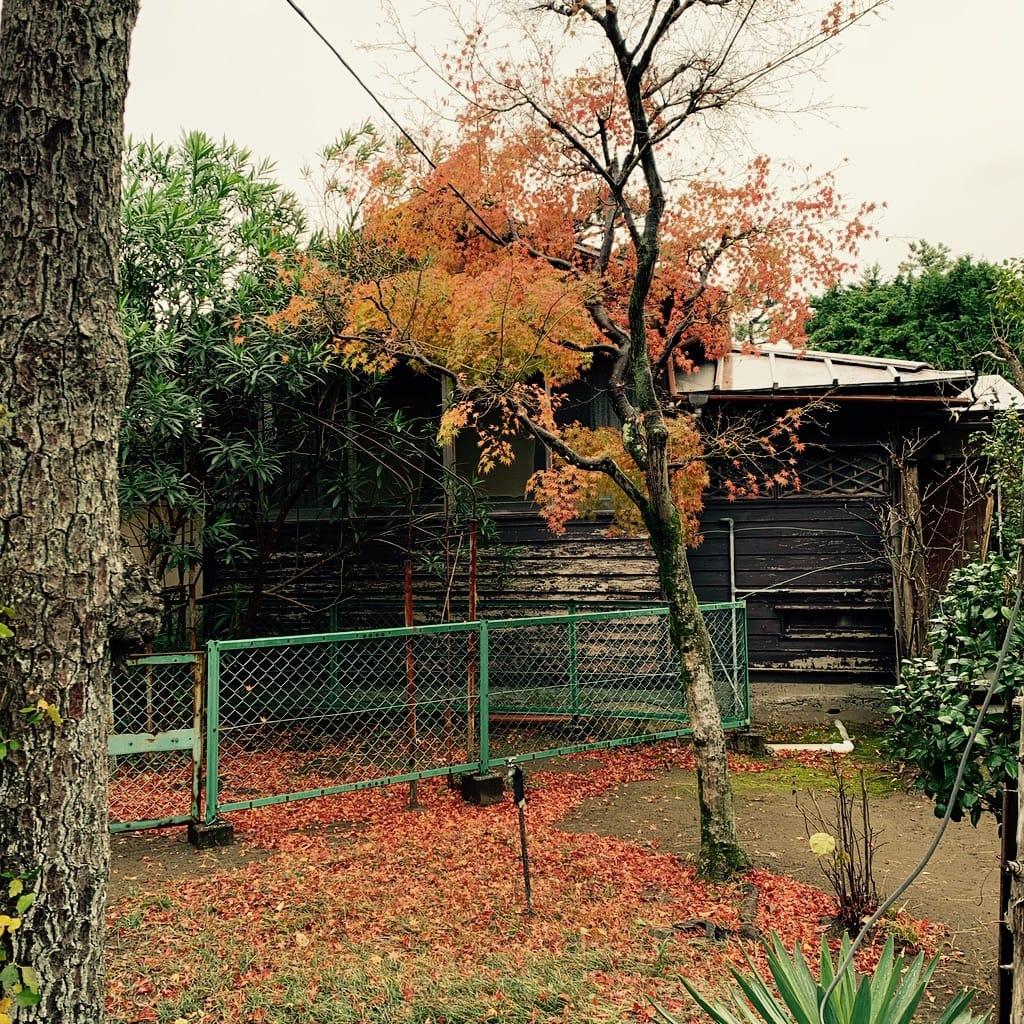 maison de bois, arbre d'automne