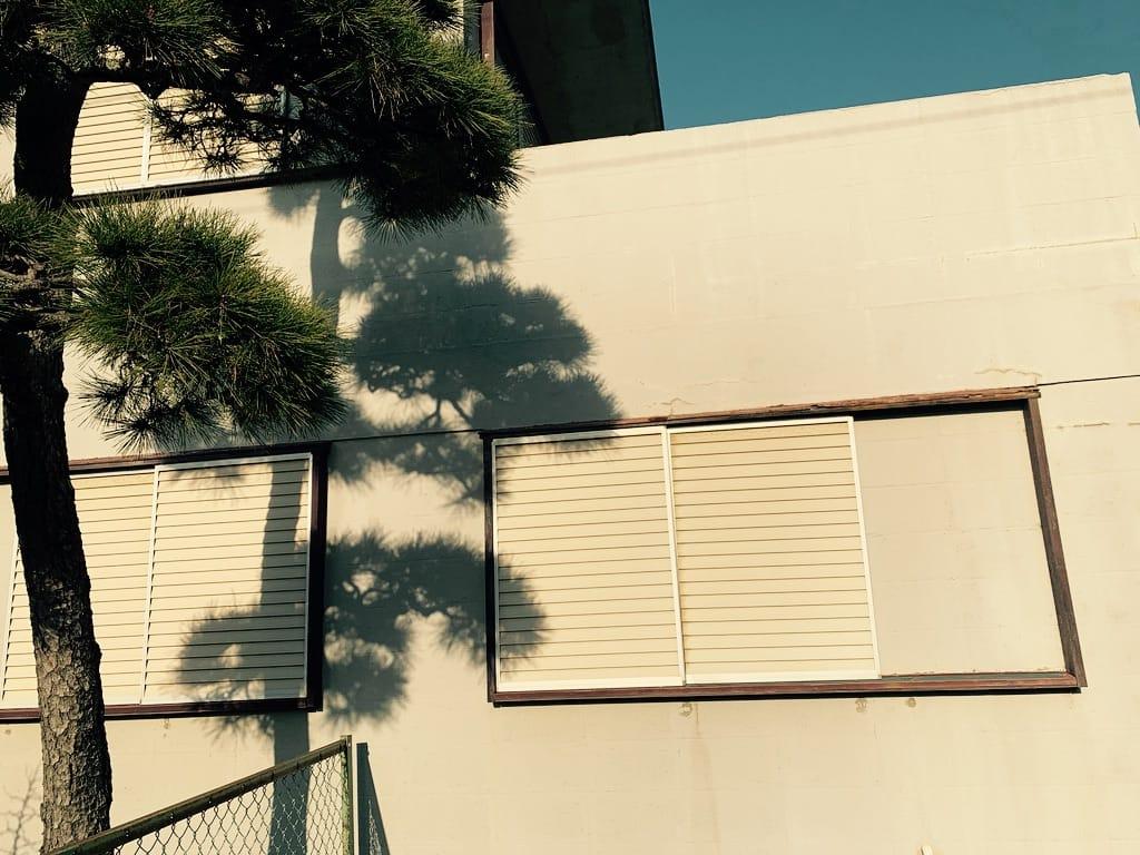 Ombre d'un arbre