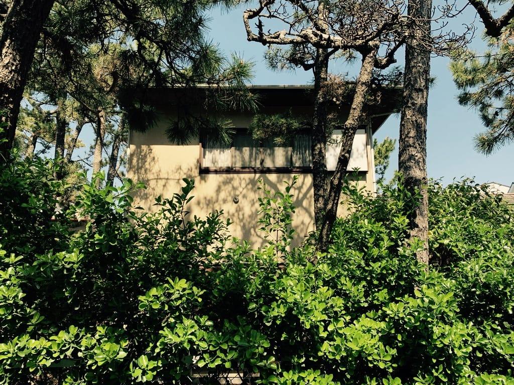 Maison entourée d'arbres