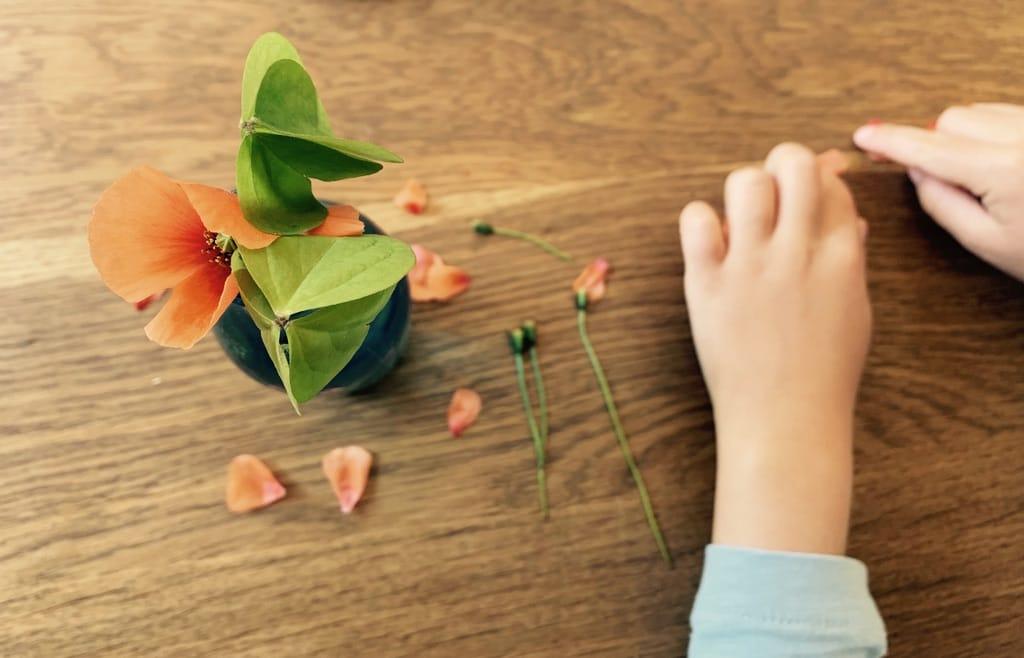 Fleurs de coquelicots et feuilles de trèfles