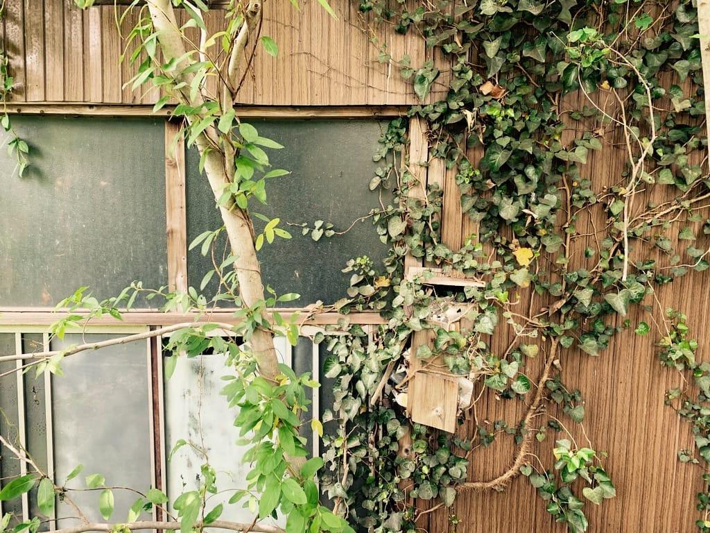 boite aux lettres, lierre, fenêtre et tronc