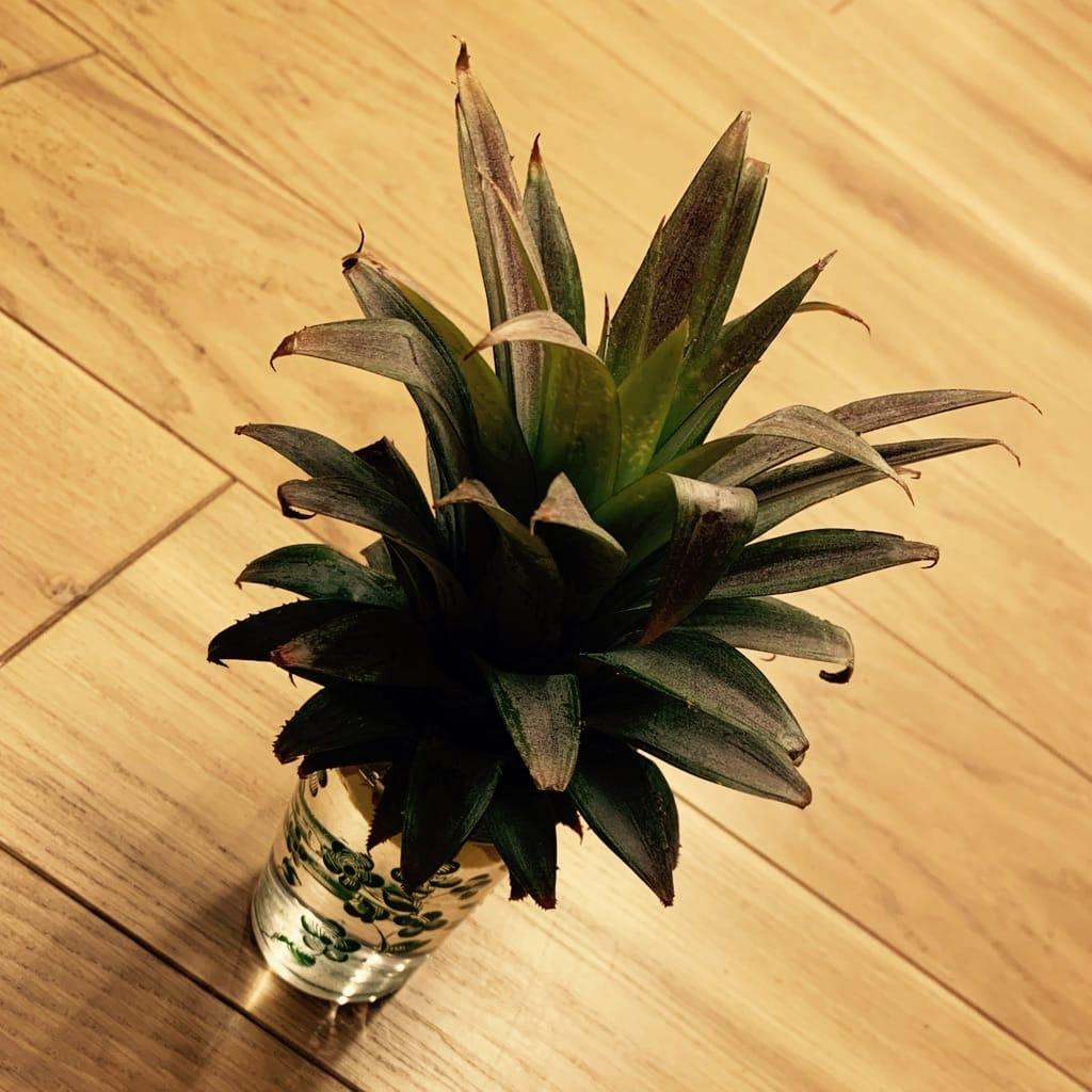 Ananas dans un verre