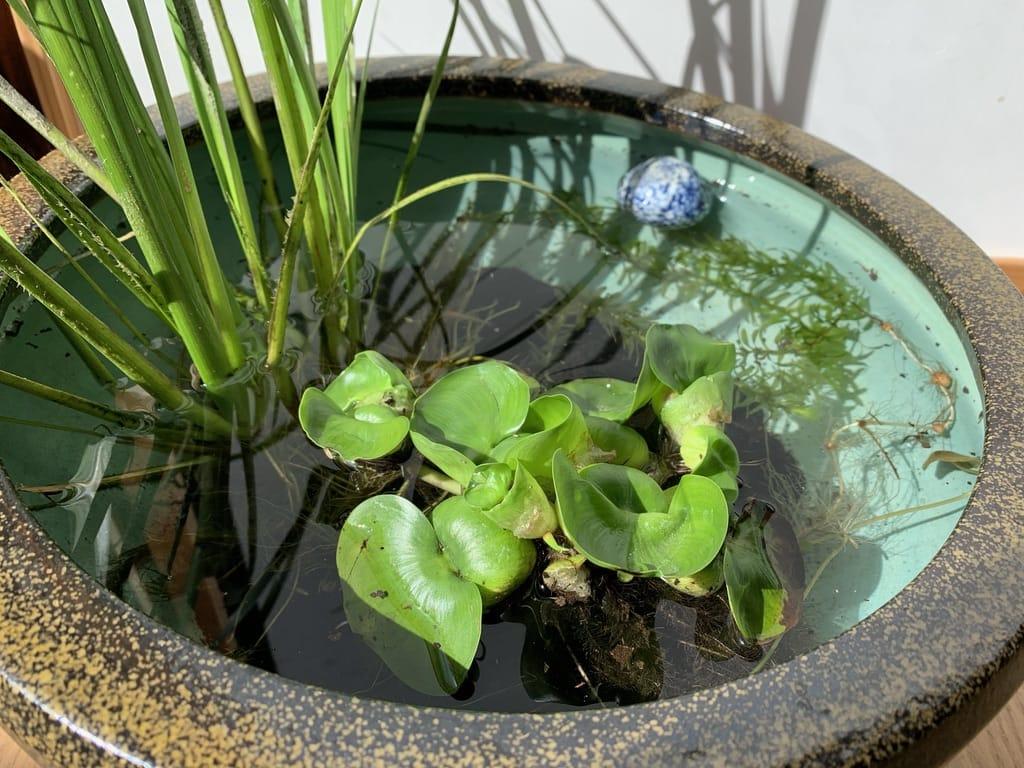 Pot avec des plantes au soleil
