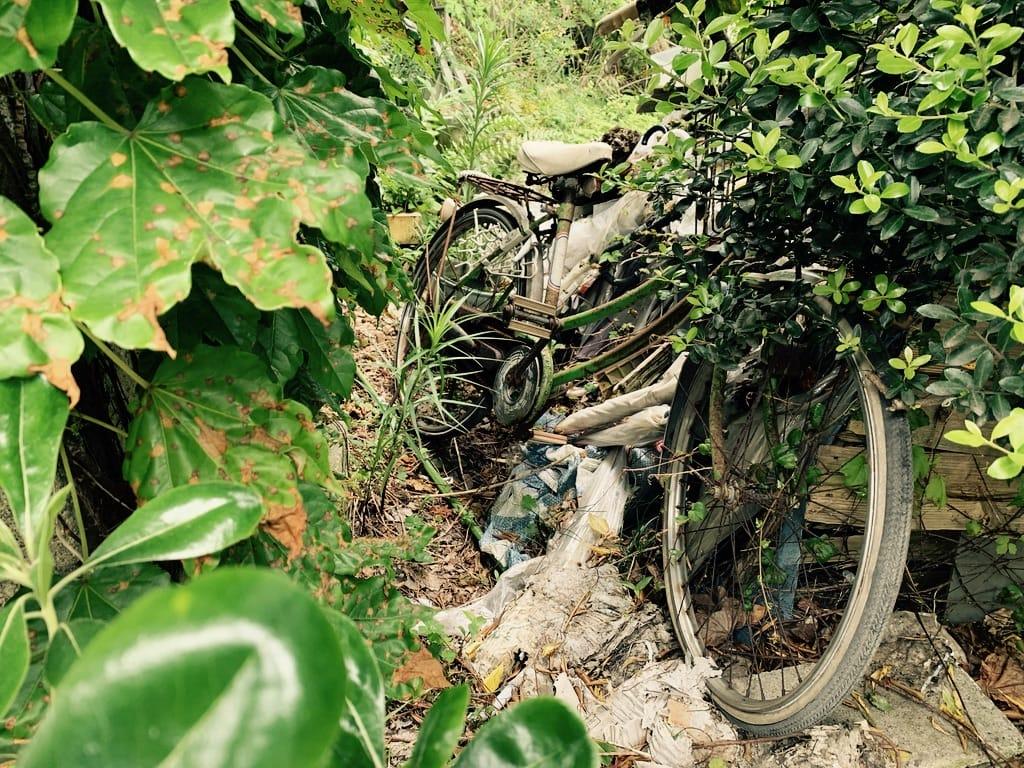 vélo abandonné dans les branchages