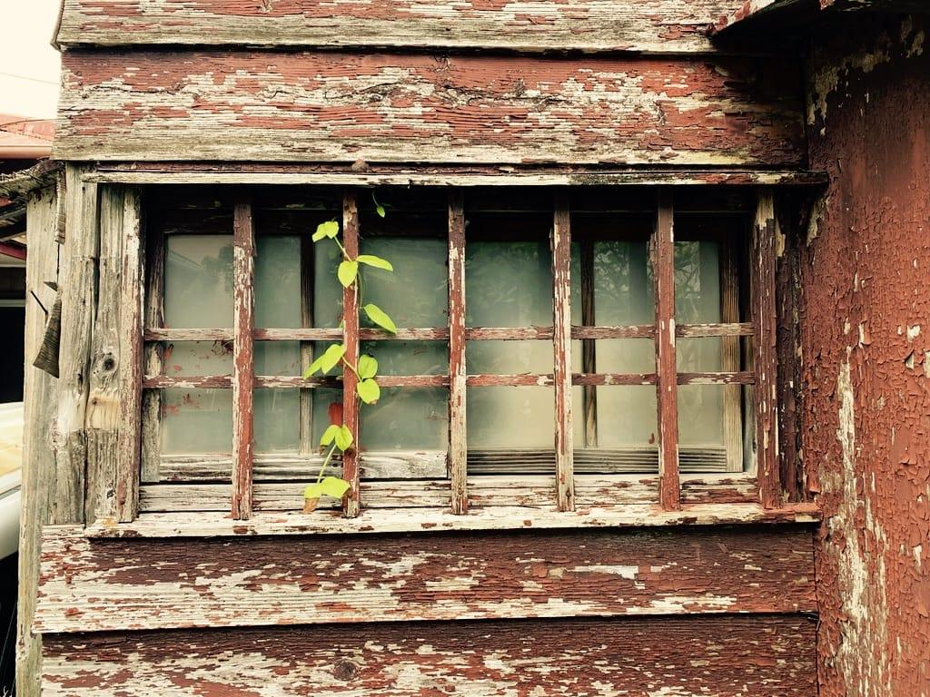 Une plante sur un barreau d'une vieille maison.