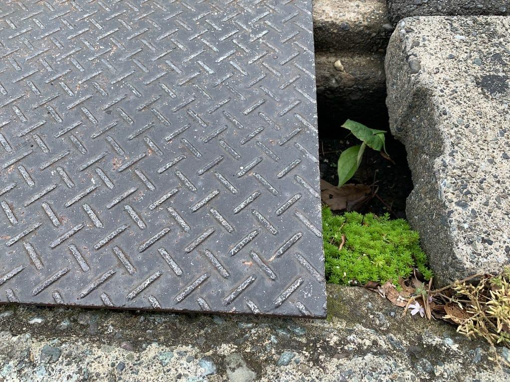 Plantes cachées dans le creux d'une rue.