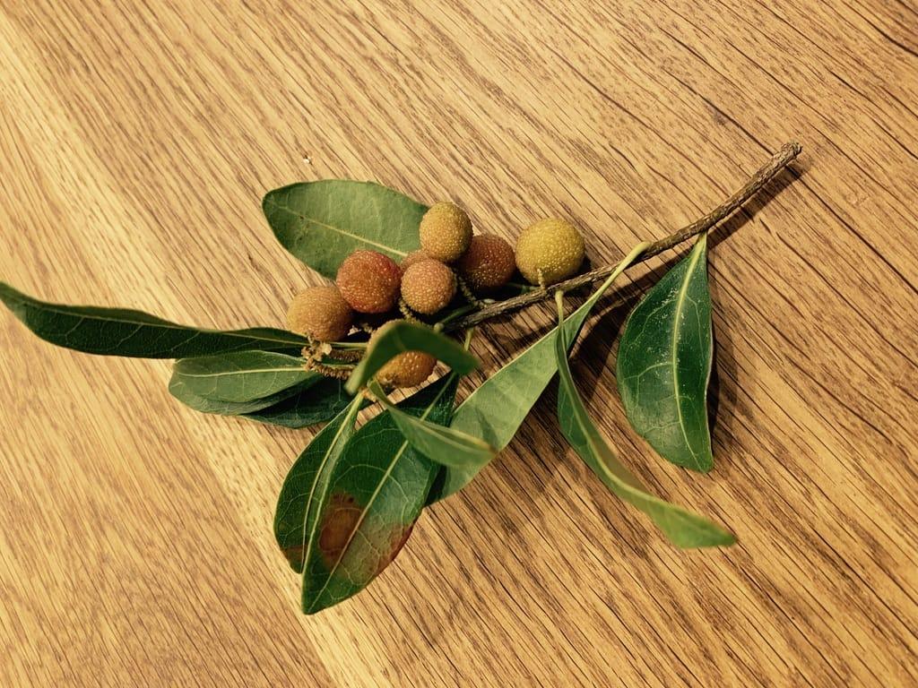 Fruits du yamamomo.