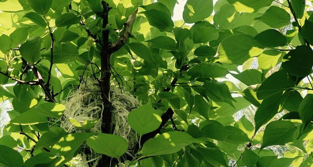 un nid en plastique au milieu des feuilles.