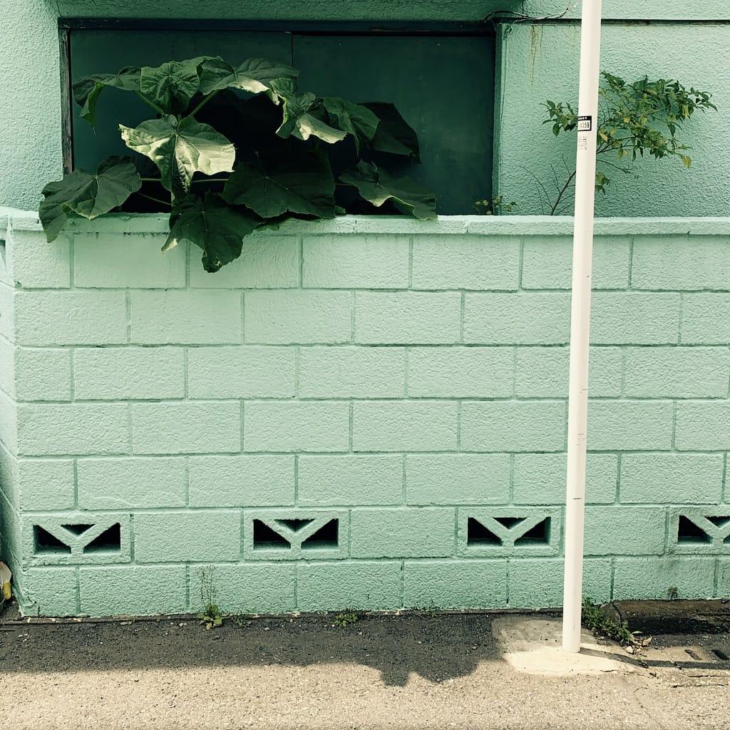 Plante sur fond de mur peint.