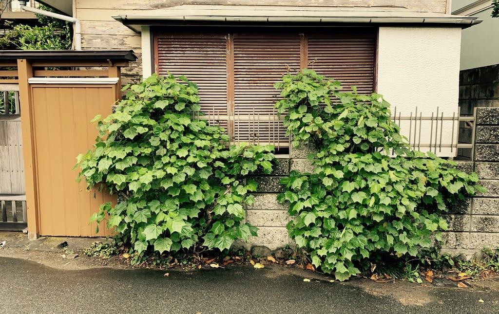 Fenêtre fermée et plantes devant.