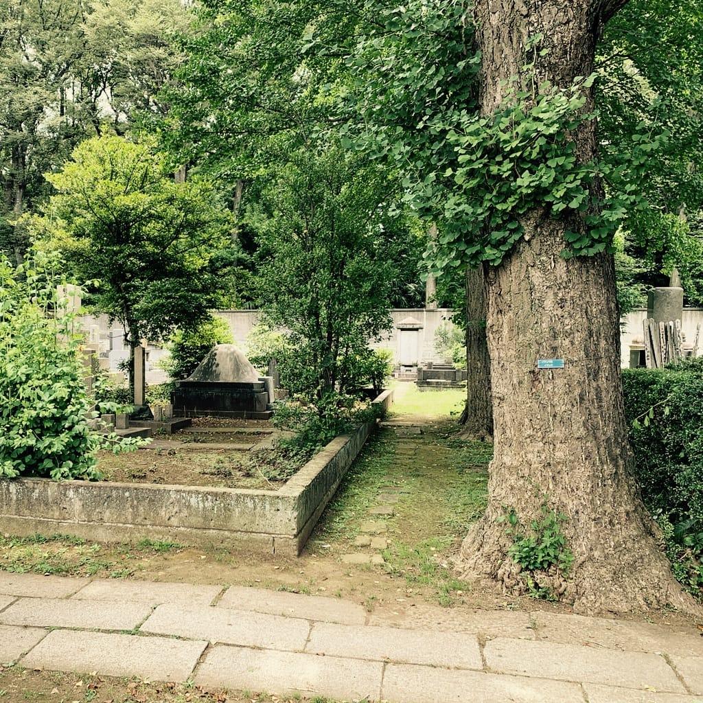 cimetière arboré.