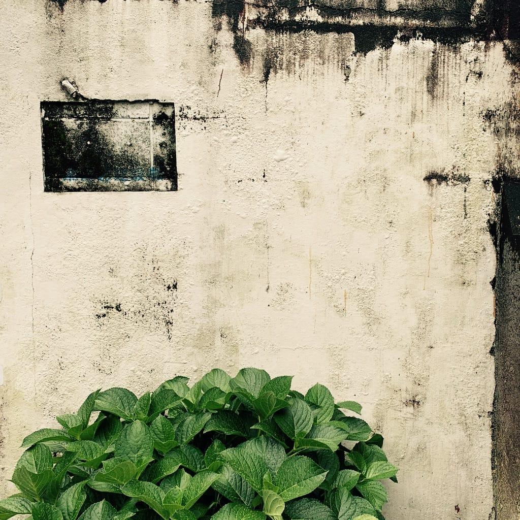 mur et plante.
