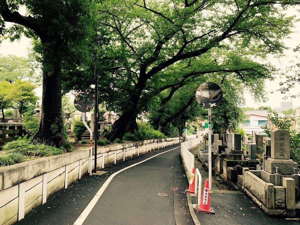 route bordée d'arbres traversant un cimetière.