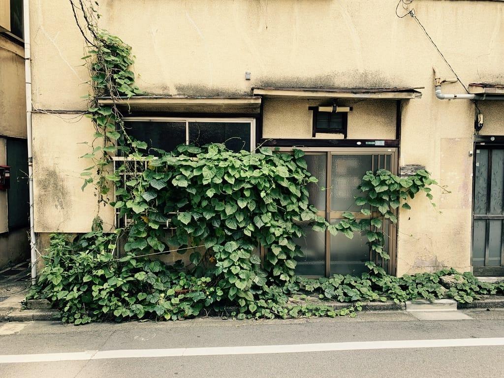 maison envahie par la végétation.