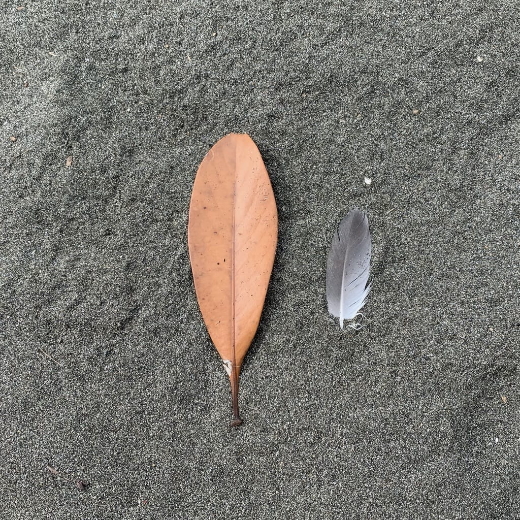 feuille et plume dans le sable.